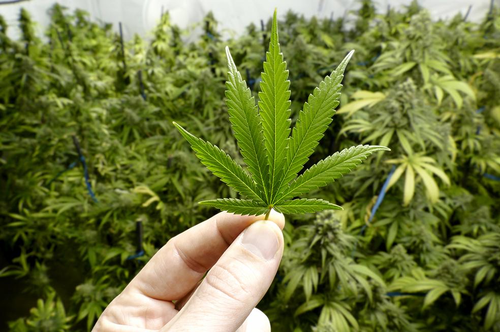 El Cannabis y la inspiración: un asunto de dimensiones