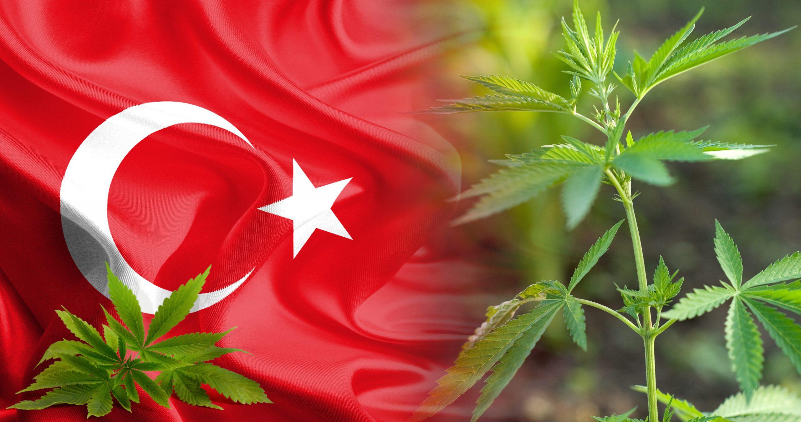 """""""El verde resurgir"""" del imperio turco"""